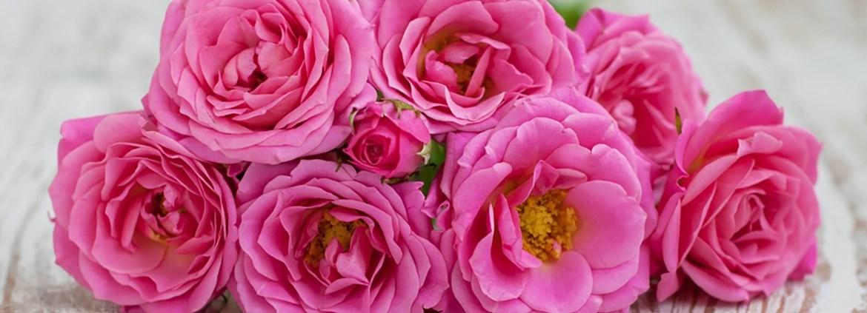 florist floristin u2013 gehalt u0026 verdienst azubiyo. Black Bedroom Furniture Sets. Home Design Ideas